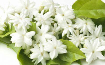 De lente ruikt naar jasmijn. De geur van hoop, de geur van positiviteit.